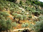 Reizvolle Orte: Caimari, Mallorca