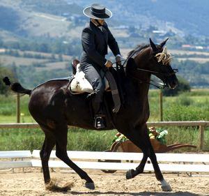 Hípica y equitación en Mallorca
