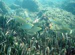 Die Posidonia Oceanica