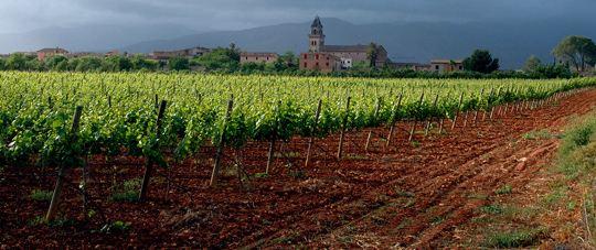 Binissalem Mallorca Wein - Herkunftsbezeichnung