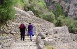La ruta verde del olivo (II), Mallorca