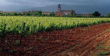 Vino de Binissalem Mallorca – Denominación de Orígen