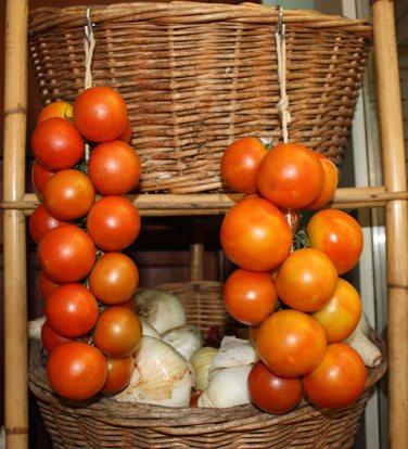 tomate-de-ramallet-Lycopersicon-Esculentum-Mill-1
