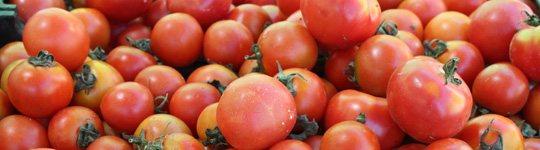 tomate-de-ramallet-Lycopersicon-Esculentum-Mill-2
