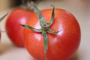 tomate-de-ramallet-Lycopersicon-Esculentum-Mill-3