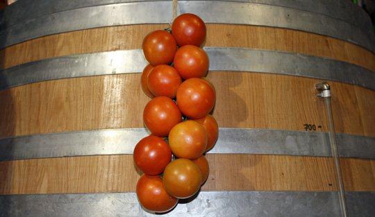 Tomate de ramallet (Lycopersicon Esculentum)