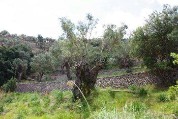 Orient, un poble de la Serra de Tramuntana, Mallorca