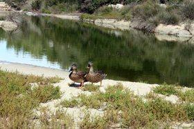 Parque Natural de Mondragó (Santanyí)