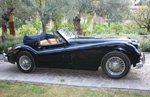 Jaguar Classic Coctel