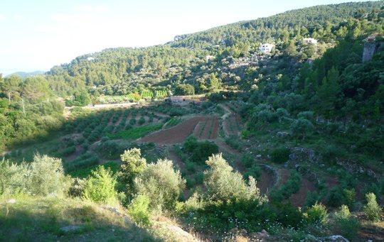 Es Verger, ökologische Olivenöl und Wein aus Mallorca