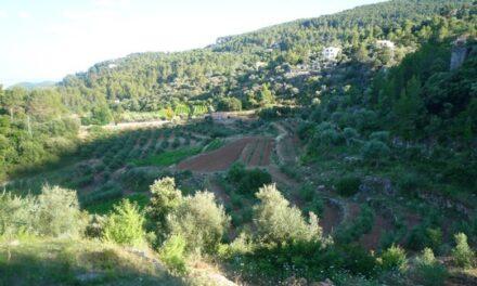 Es Verger, aceite y vino ecológico de Mallorca
