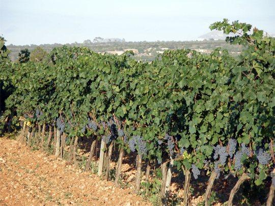 Vins-Can-Coleto-Mallorca