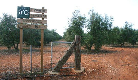 llogaret-de-Jornets-Mallorca-1