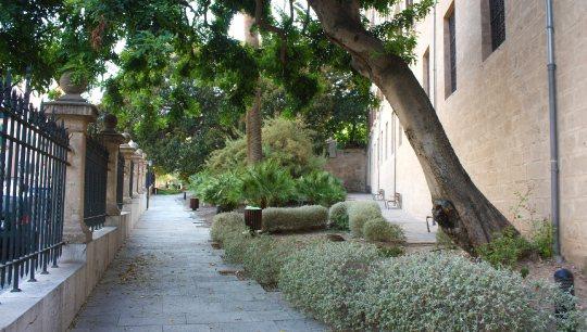 jardines-de-la-misericordia-botanico-palma-de-mallorca-ficus-3
