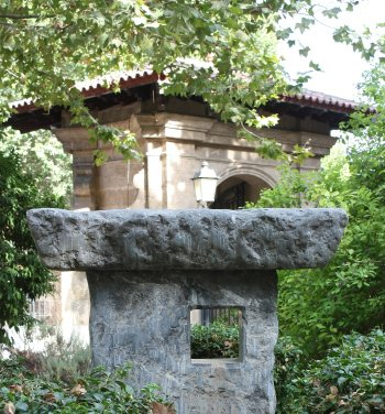 jardines-de-la-misericordia-botanico-palma-de-mallorca-ficus-4
