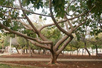 parques-urbanos-palma-de-mallorca-2