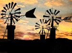 Mallorca retains the largest collection of flour windmills in Europe-copyright-andreu-negre