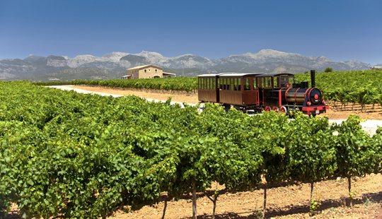 mallorca-wine-express-bodegas-train-tour-5