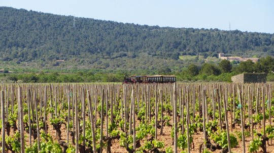 mallorca-wine-express-bodegas-train-tour