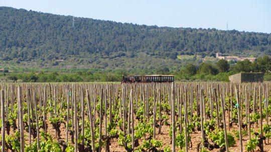 mallorca-wine-express-bodegas-train-tour