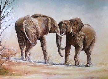 Antoni Bennassar, elefants africans