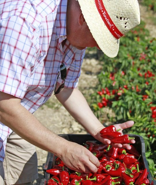 "Especias Crespí boosts the quality of their ""tap de cortí"" sweet pepper"