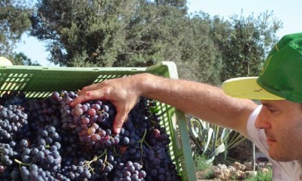 5,9 millones de litros de vino de calidad diferenciada