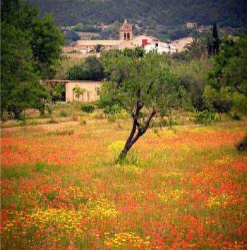S'Arracó, Dorf von Mallorca