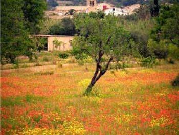 S'Arracó no fue siempre un pacífico valle