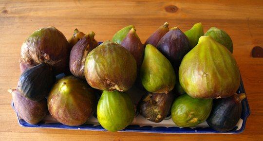 figues-fig-feigen-higueras-mallorca-1