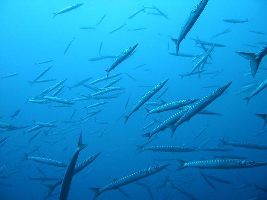 5-mejores-lugares-buceo-mallorca-diving-1