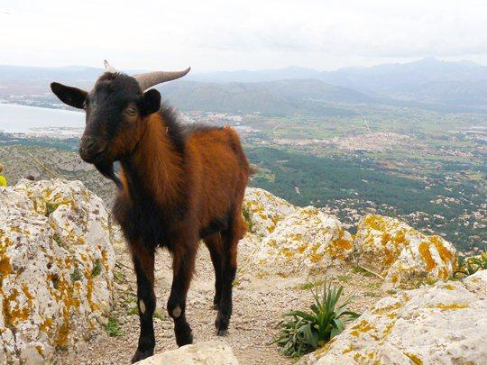 Talaia d'Alcúdia, Mallorca (Excursions)