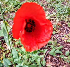 Полевые цветы в лесах и лугах Майорки