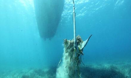 Se aumenta la protección de la Posidonia en Baleares