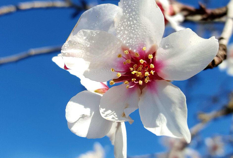 Una primavera en Mallorca